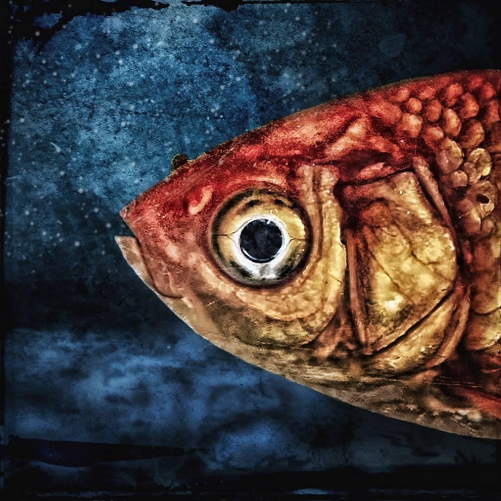 Umo Art Gallery Isidor, the goldfish