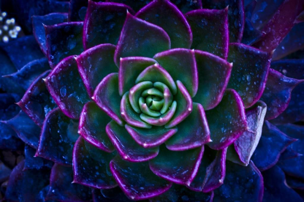 Umo Art Gallery Wild Flowers