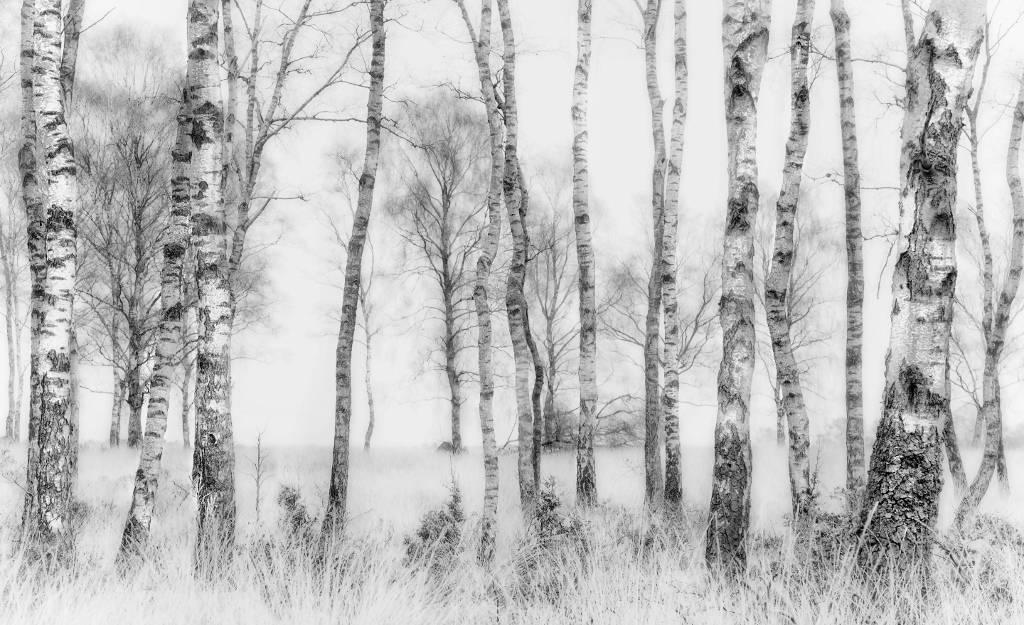 Umo Art Gallery Black and white