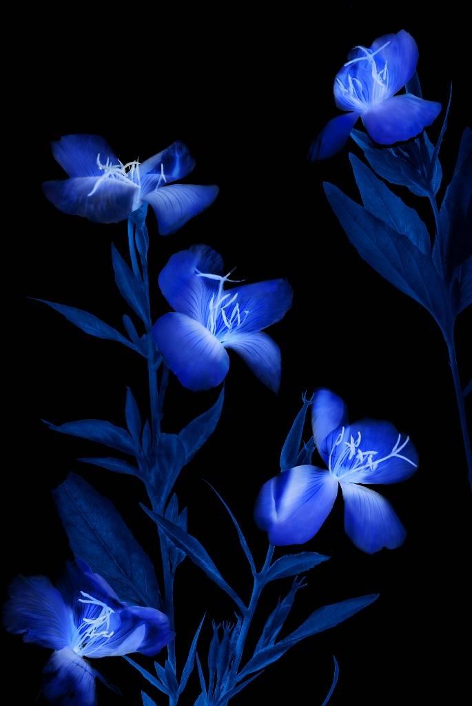 Umo Art Gallery Etude in blue