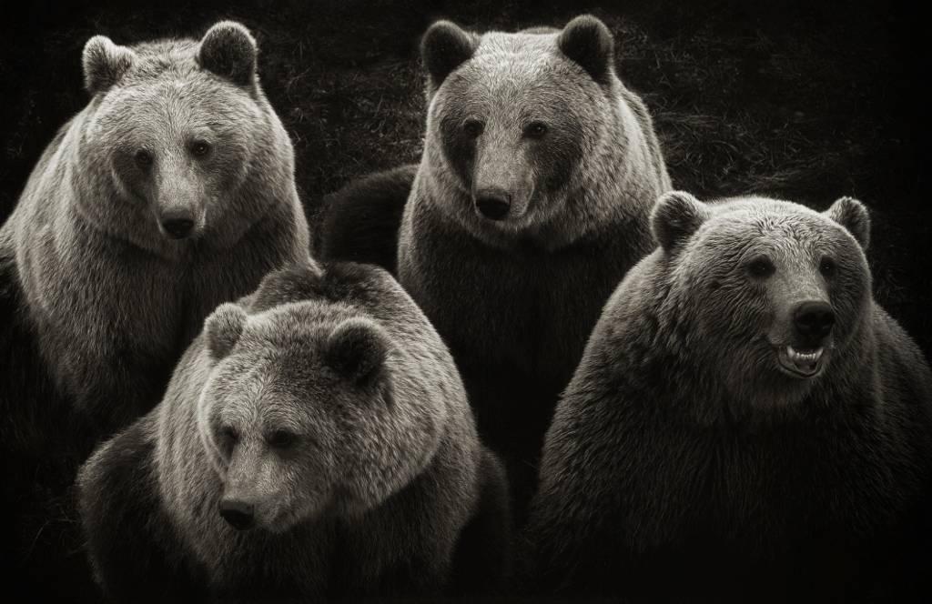 Umo Art Gallery Brown Bears