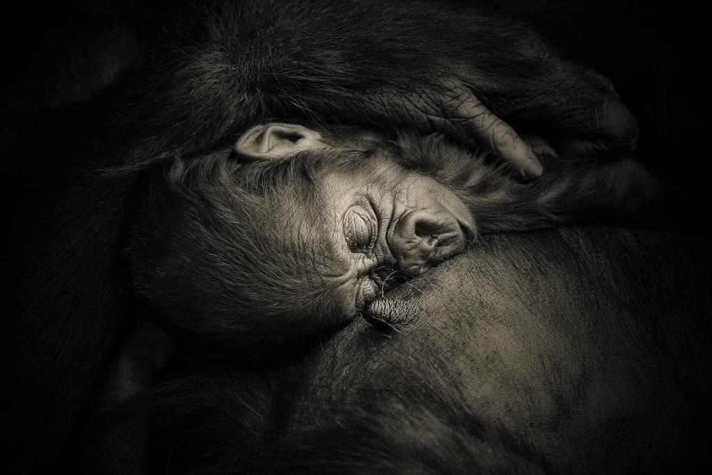 Umo Art Gallery MOTHER'S HUG ....