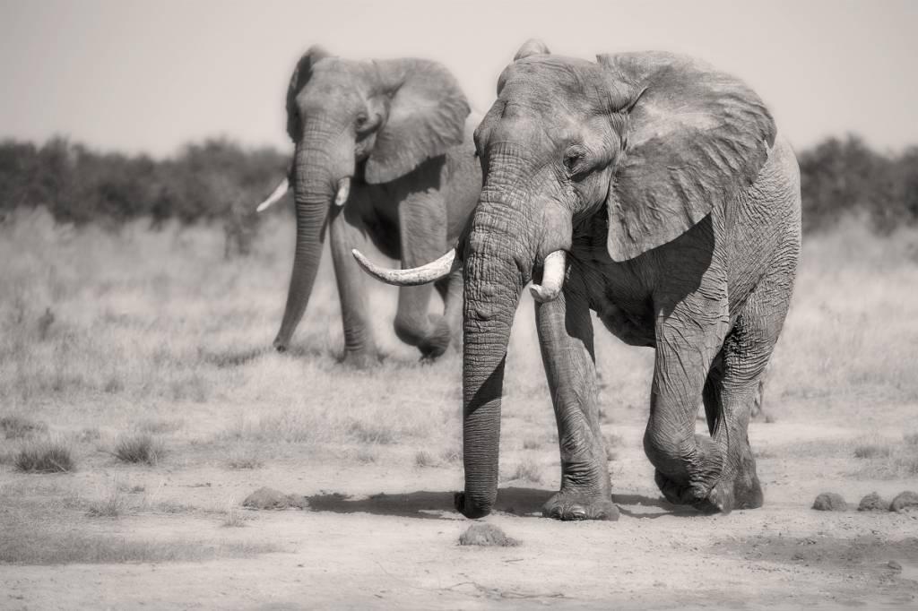Umo Art Gallery Twin Elephants