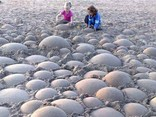 WillySpheres Sand Shapers