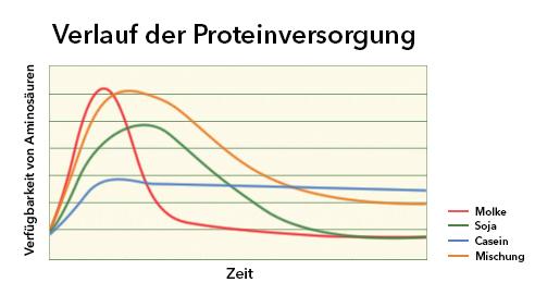 Verlauf der Proteinversorgung