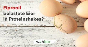 Skandal um Fipronil belastete Eier