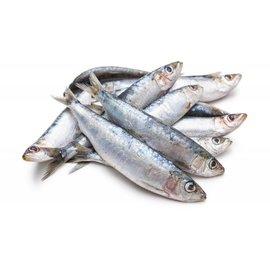 my seafood hele sardines