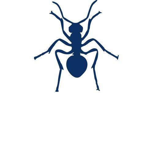 Overige kruipende insecten