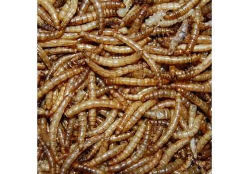 JUNAI Gedroogde Meelwormen