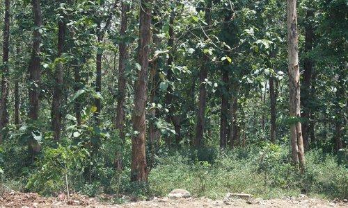 Wat is plantage teakhout?