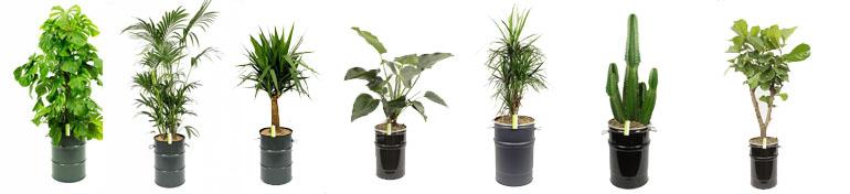 Olievaten plantenbakken