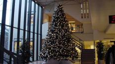 Grote kerstboom kopen