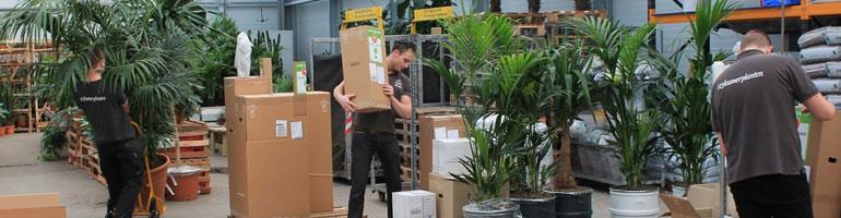 webshop voor grote kamerplanten