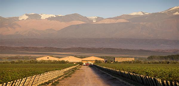 Rotwein Argentinien Mendoza