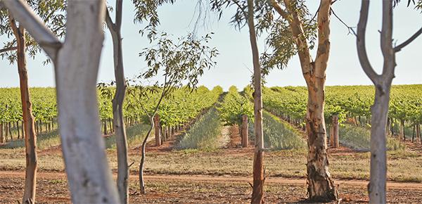 Rotwein Australien Trentham