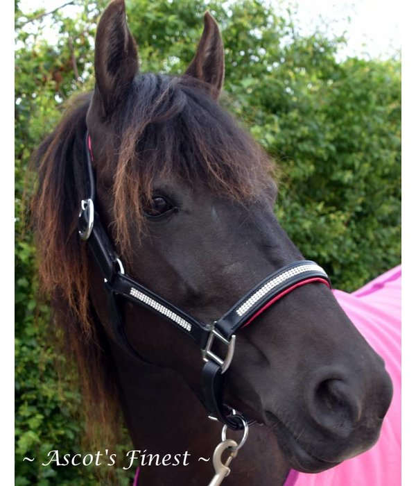 Ascot's Finest Black leather halter with pink padding and white strass - Pony, Cob and Full