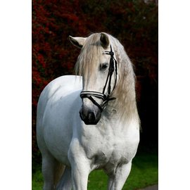 Ascot's Finest Zwart rundlederen hoofdstel, wit onderlegd, met fijne strass