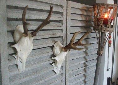 Opgezette dieren en schedels