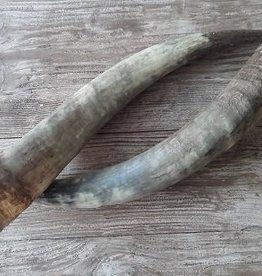 Watoessi hoorn