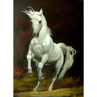 Schitterend wit paard | 110x80cm