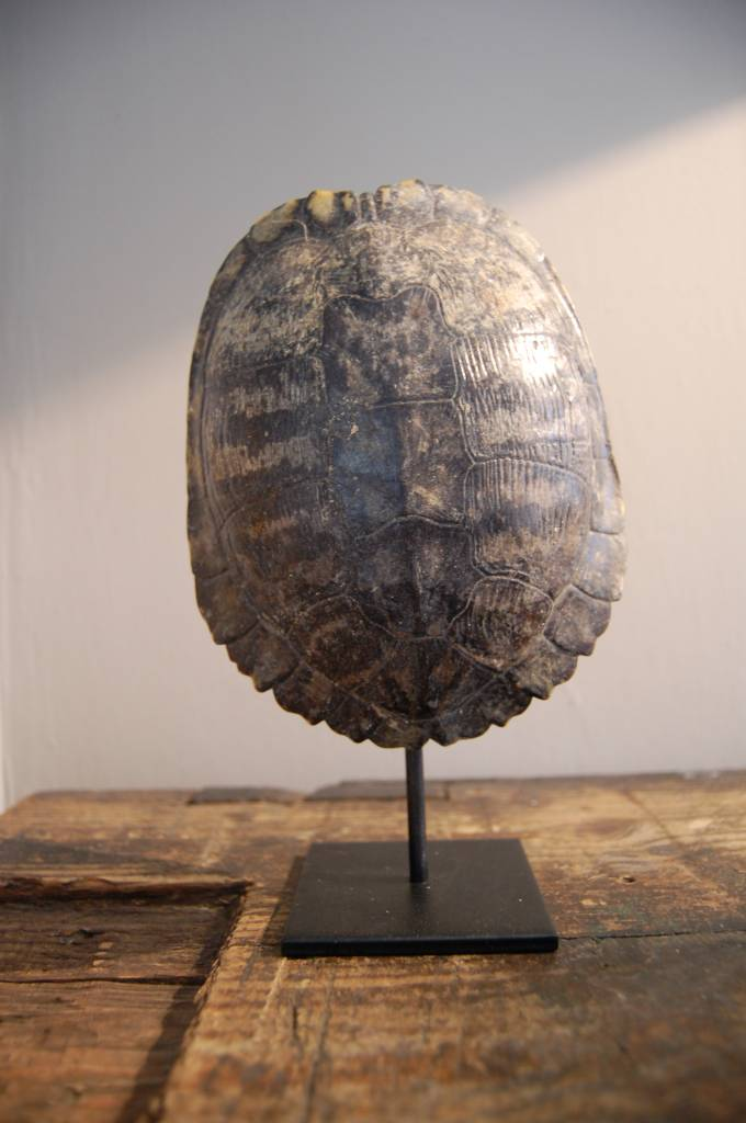 Schildpad schild op statief