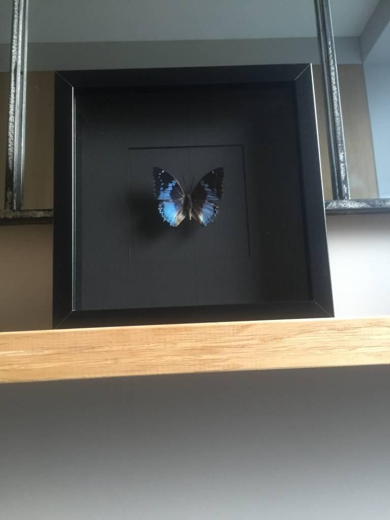smaragdalis vlinder in lijst