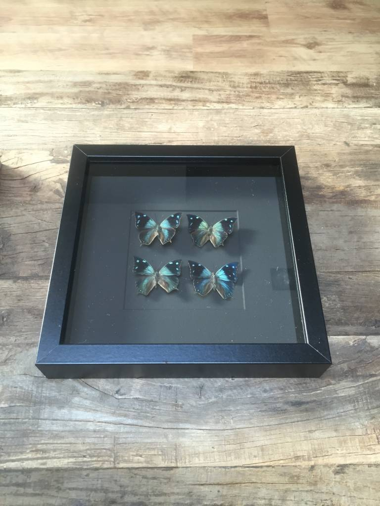 Vier vlinders in lijst