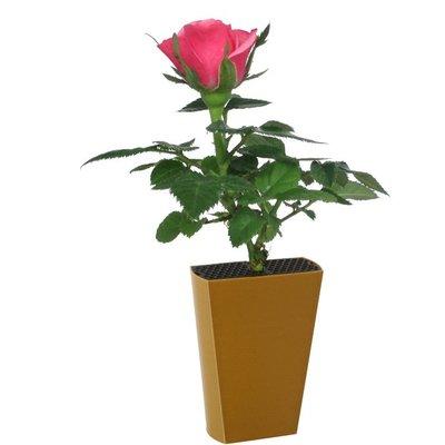 Roosje Roze