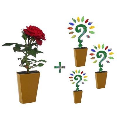 Jaarabonnement 4 Seizoenen: Rode roos + drie nieuwe soorten