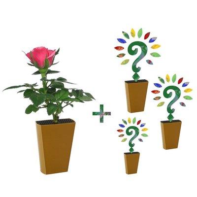 Jaarabonnement 4 Seizoenen: Roze roos + drie nieuwe soorten