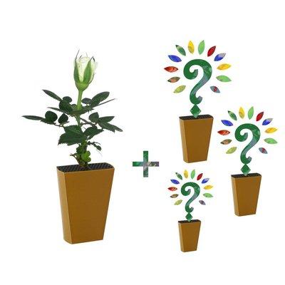 Jaarabonnement 4 Seizoenen: Witte roos + drie nieuwe soorten