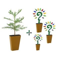 Jaarabonnement 4 Seizoenen: Sequoia + drie nieuwe soorten