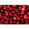 Cranberry (Vaccinium macrocarpon 'Pilgrim')