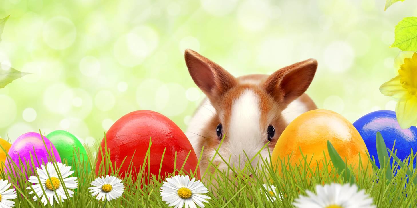 HAPPY EASTER! Finde das Osterei und bekomme 1 SHOWBOX Gratis zu Deiner Bestellung!