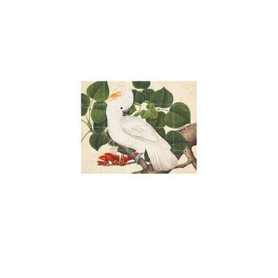 Cockatoo - Klein 100 x 80 cm