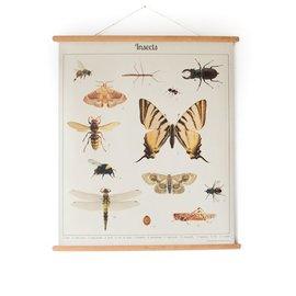 Nieuweschoolplaten Schoolplaat Insecten