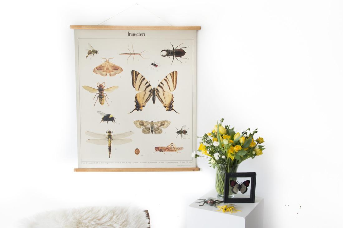 Schoolplaat insecten