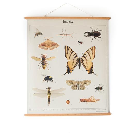 Schoolplaat insect