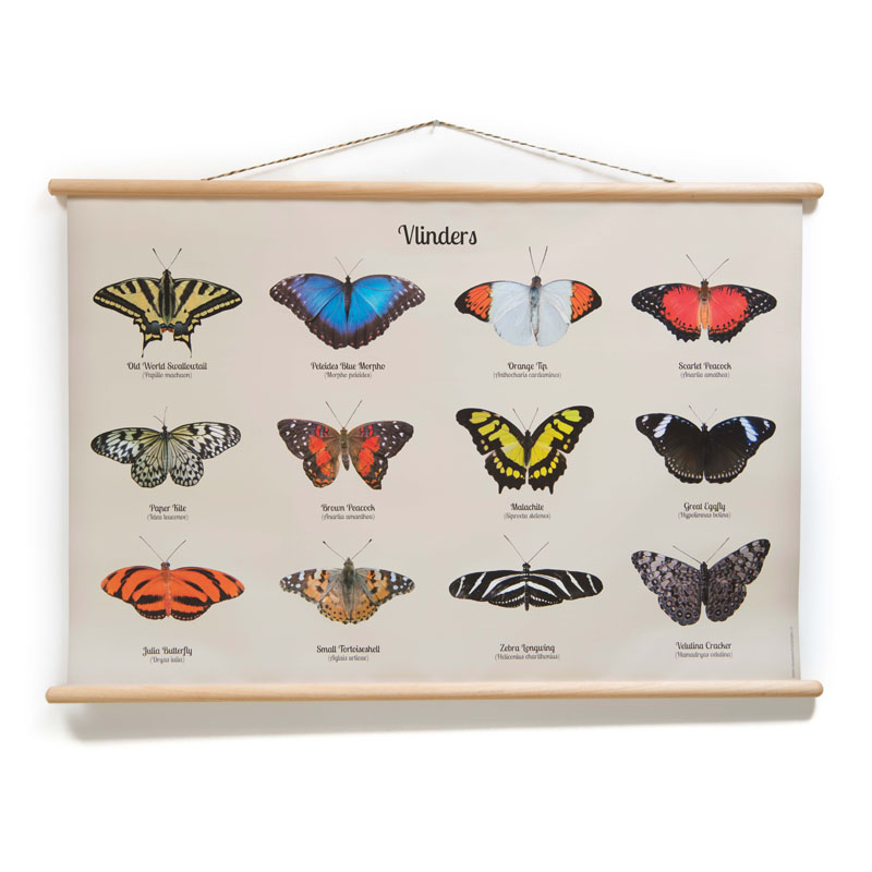 Schoolplaat Vlinders