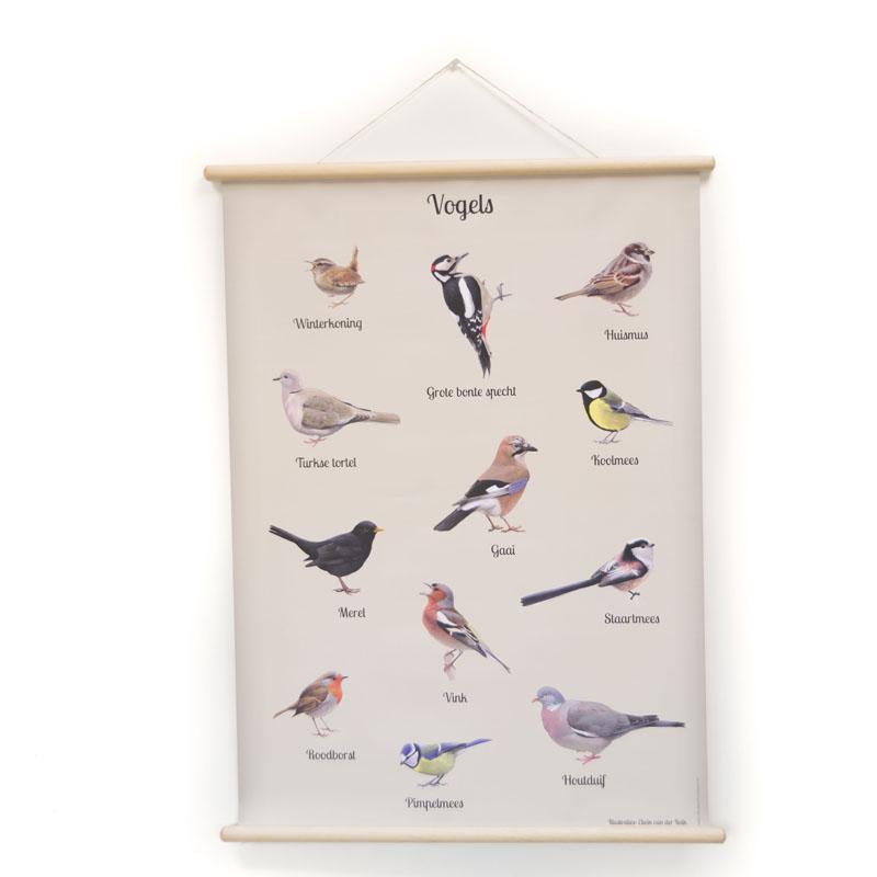 Schoolplaat vogels