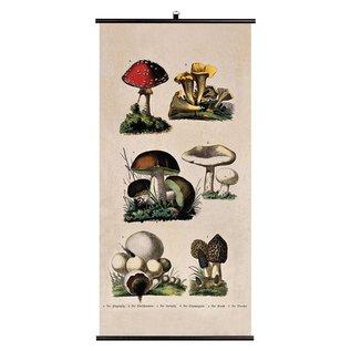 Jay Schoolplaat Biologica - Paddenstoelen (Fungi)