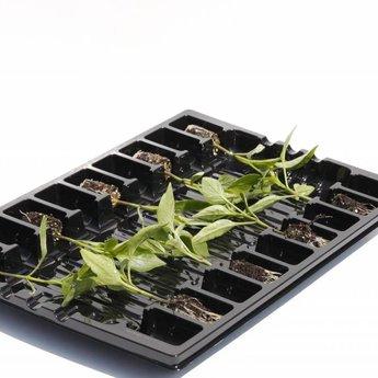 mixpakket diverse peperplanten