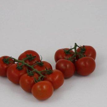geënte trostomaten planten kweken, tomatenplanten, zaaien, kopen