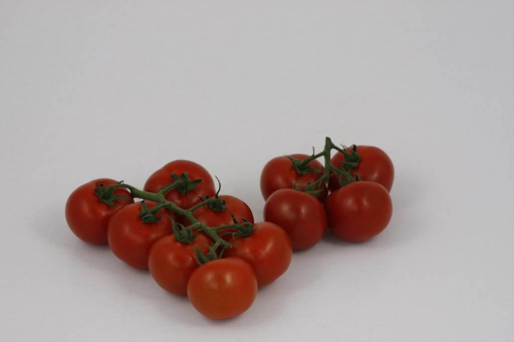 tomaten kweken ge nte tros tomatenplanten online. Black Bedroom Furniture Sets. Home Design Ideas