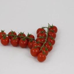geënte cherrytomaten