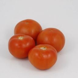 geënte vleestomaten (9 planten)