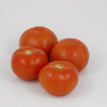 geënte vleestomaten planten kweken, tomatenplanten, zaaien, kopen
