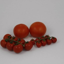 mixpakket geënte tomaten