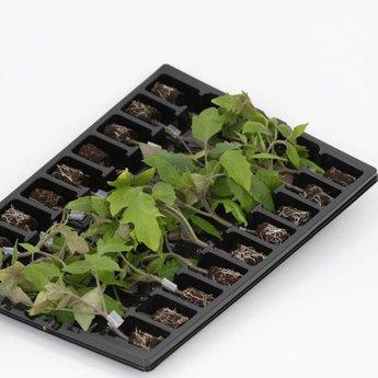 mixpakket geënte tomatenplanten
