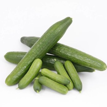 mixpakket diverse komkommerplanten